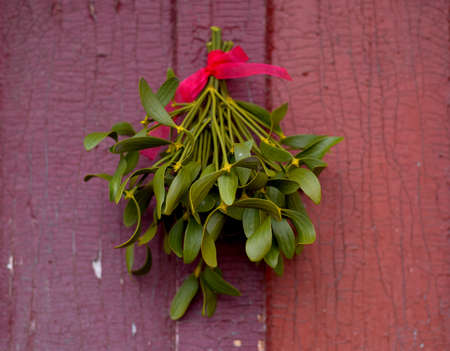 Christmas festive background with green mistletoe hanged on the old cracked door background. Holiday decor ideas. 写真素材