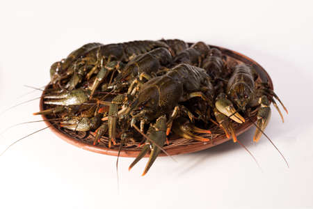 Crayfish live on a dish isolated on a white background. Raw crawfish. Fresh seafood snack.