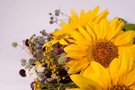 Sunflowers and dry herbarium flowers on a white background. Bright yellow summer flowers with copy space for text. Standard-Bild