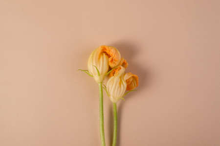 Pumpkin blossoms cut from the garden. Flat lay floral backdrop with empty space for your text.