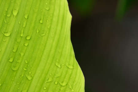 water on leaf photo
