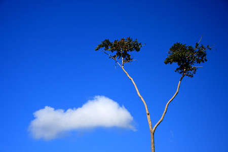 clound: tree and clound in blue sky