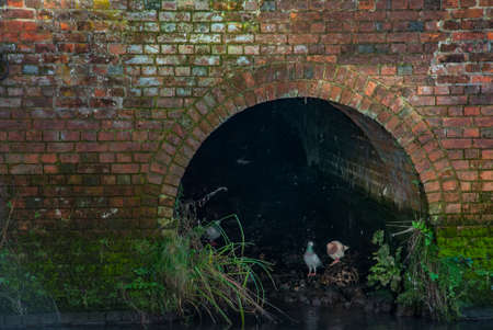 Two pigeons under the water tunnel