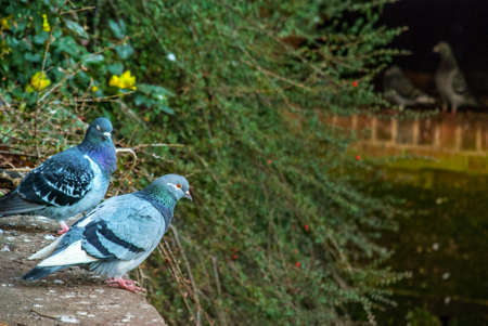 Two pigeons on the cement floor by the canal Banco de Imagens