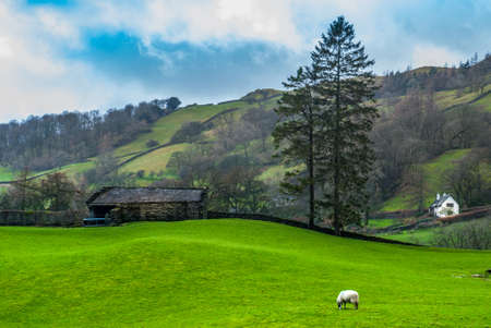 Landscape with English countryside of sheep on the hillside