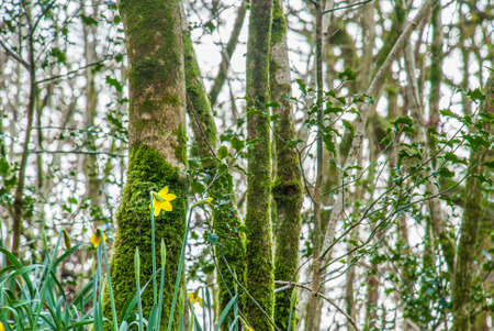 Close-up pictures of trees in the forest during spring Suitable for making background images.