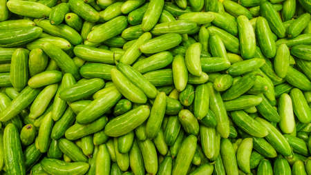 Raw Green Organic Tindora suitable for background images. Stock Photo