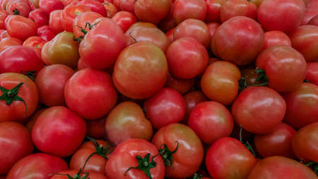 red tomatoes background. Group of tomatoes Suitable for making background images.