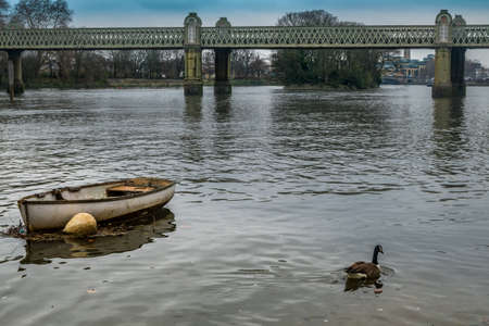 Canada geese swim near a rowing boat parked in the waters of the Thames Near the Kew Railway, Bridge. Stock Photo