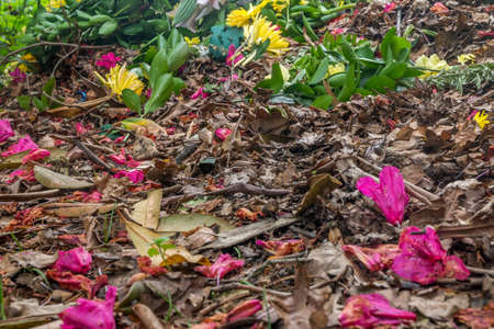 Flowers that fall on the floor, beautiful, suitable for background images