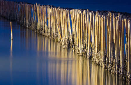 Mangrove forest wave protection line  in twilight time at Bang Khun Thian sea, bangkok, thailand, copy space