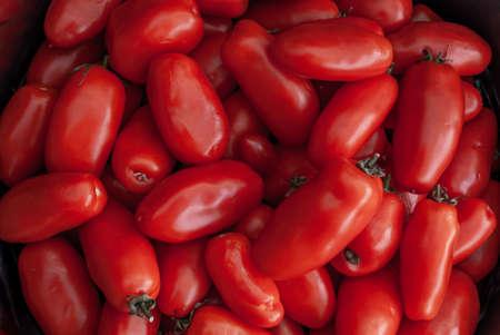갓 산 마르자노 토마토, 빨간 토마토 배경입니다. 토마토 그룹 배경 이미지를 만드는 데 적합합니다.