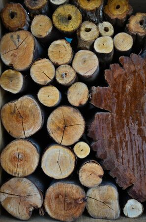 Timber Stock Photo - 10298683