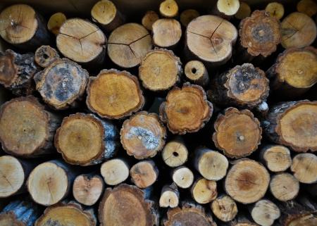 Timber Stock Photo - 10298682