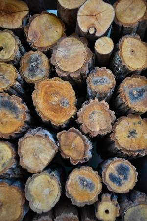 Timber Stock Photo - 10298684