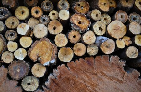 Timber Stock Photo - 10298685
