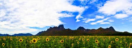 Sunflower Stock Photo - 11818554