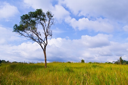 tree and meadow Stock Photo - 17622009
