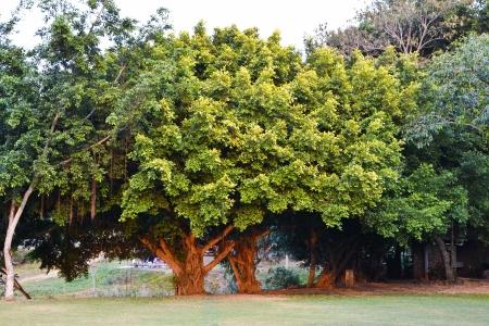 The tree Stock Photo - 17621968