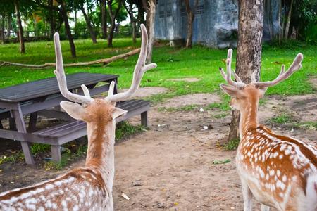 Dees in open zoo