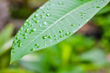 Green leaf with water drops for background Stock Photo