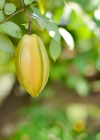 star apple thai