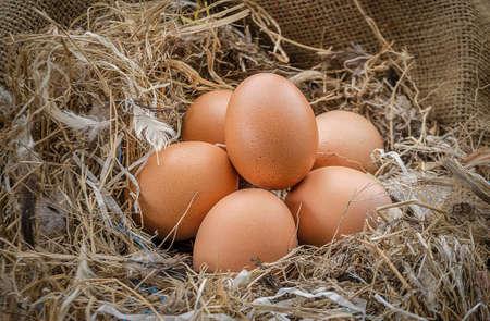 origen animal: Huevos de pollo en una granja.