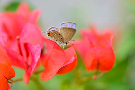 Butterfly on a red flower
