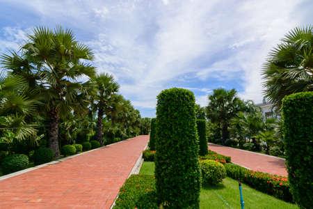 empedrado: ladrillos rojos entre la tierra con verde primavera fresca o hierba de verano en un parque jardín