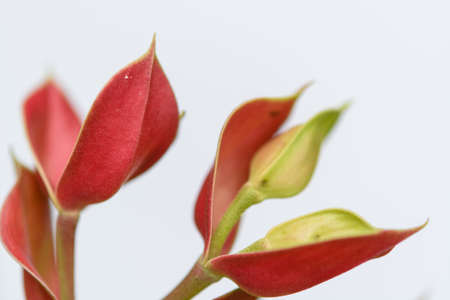 auspiciousness: Trees bird mascot, pink flowers shaped like birds, a garden crop to auspiciousness thailand Stock Photo