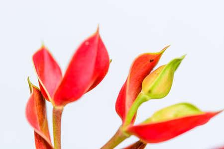 Trees bird mascot, pink flowers shaped like birds, a garden crop to auspiciousness thailand Stock Photo