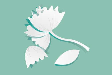 white lotus flower: Beautiful white lotus flower