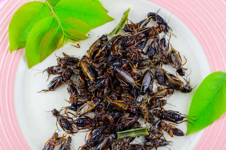 fried crickets on White dish, fried crickets are regional delicacies in Thailand