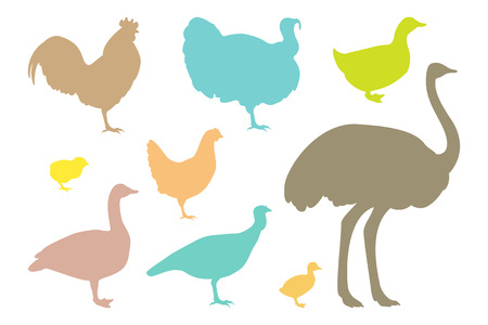 ostrich chick: Farm bird silhouettes. Vector Illustration. Isolated on a white background.