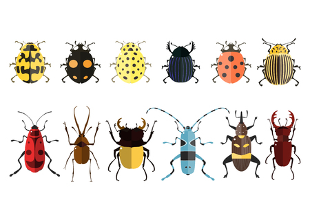 Vector illustration of bugs. Isolated on a white background. Beetle icons. Insect set.