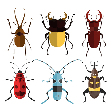 firebug: Vector illustration of bugs. Isolated on a white background. Beetle flat icons. Insect set.