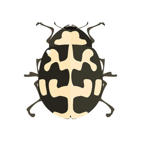 ladybird: Ladybird. Insect icon. Vector illustration on a white background.