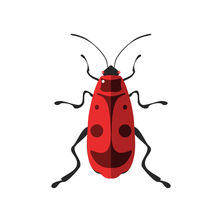 Vector illustration of a firebug. Isolated on a white background. Illustration