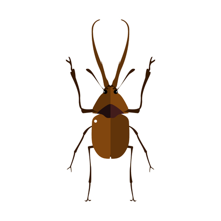 stag beetle: Vector illustration of a stag beetle. Isolated on a white background. Illustration