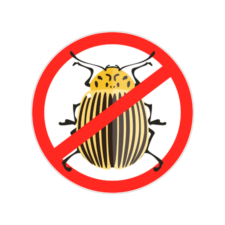 brindled: Vector illustration of a colorado beetle. Red Prohibition sign. Isolated on a white background. Illustration