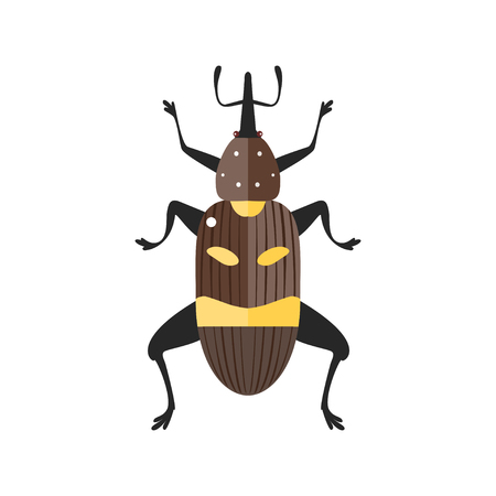 weevil: Vector illustration of a true weevil. Isolated on a white background.