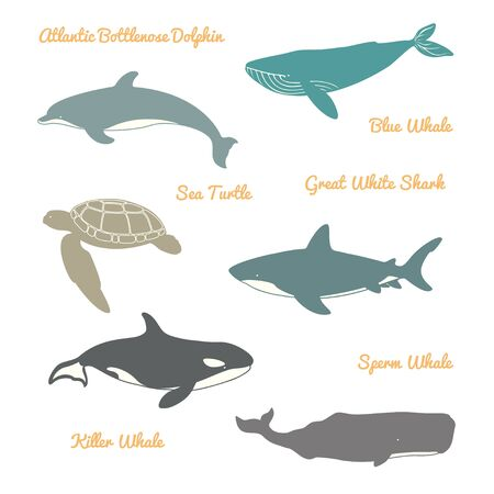 Great White Shark, Sea Turtle, Atlantic Bottle nose Dolphin and Whales.  illustration. Isolated on a White background.