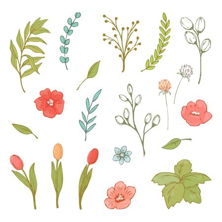 Flower and herbs illustration. Vector.