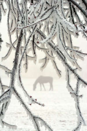 a horse through white frosted branches