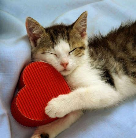 corazones azules: a�n con vida gatito de dormir con un coraz�n de papel