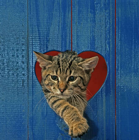 cat looking throw hole in heart shape