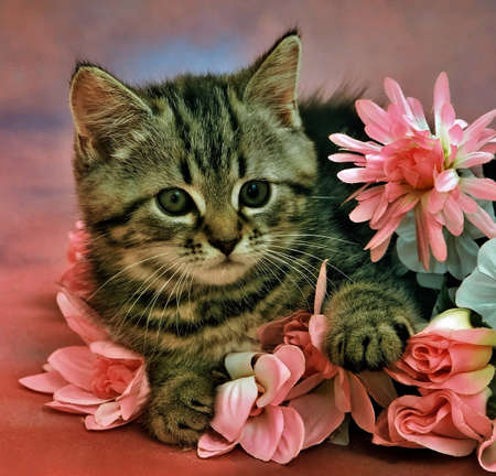 still-life with a kitten laying in flowers Standard-Bild