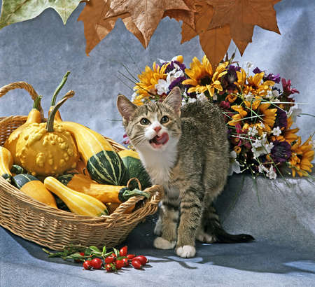 still life with cat and pumpkins