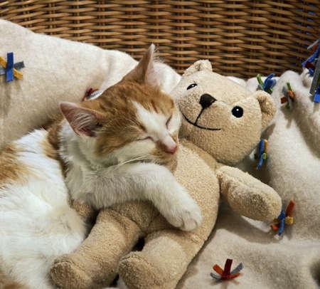 Katze schlafen mit Teddybär Standard-Bild - 3662197