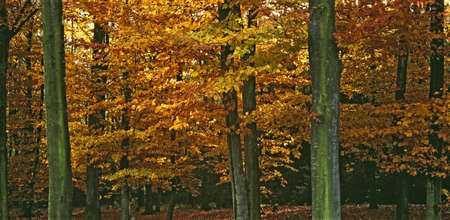 close up of a colorful autumn trees Stock Photo - 7723471